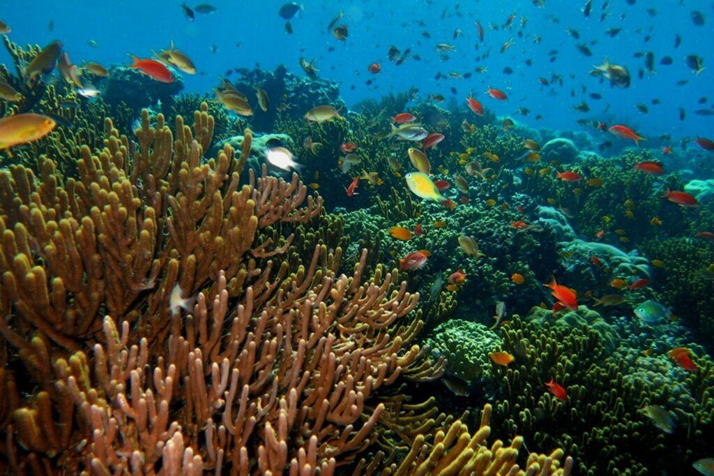 Keindahan bawah laut