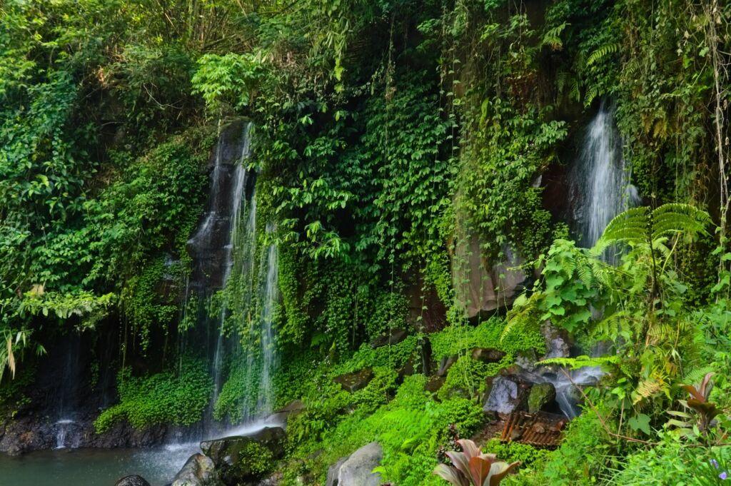 Keindahan Air Terjun Curug Putri Pelangi dengan Semak yang Menghiasi