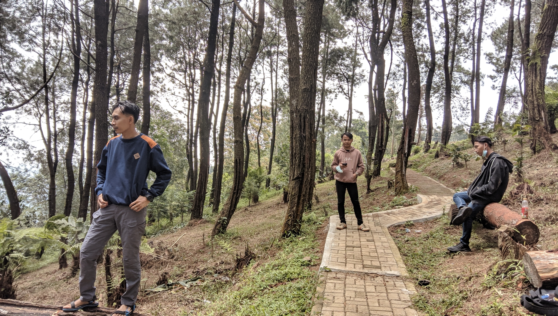 Santai di hutan pinus