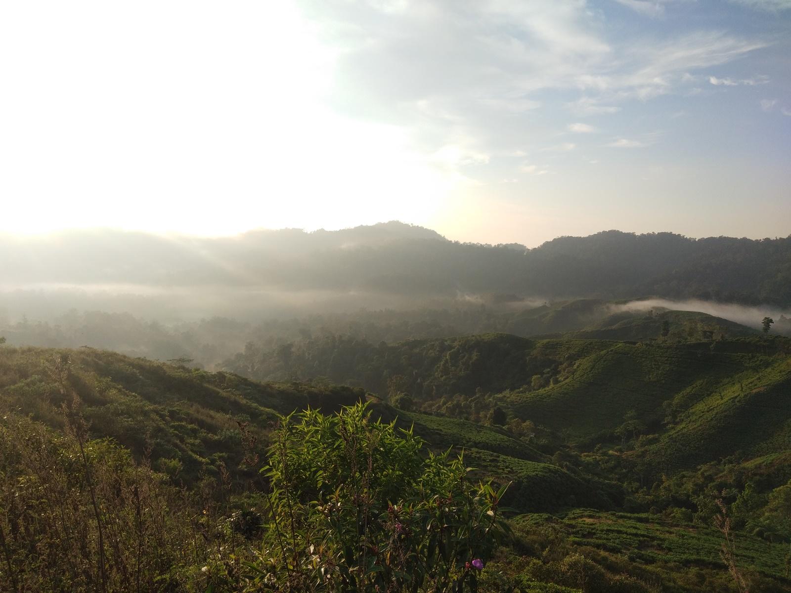 Matahari terbit di kawasan kebun teh