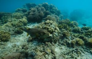 Pemandangan bawah laut Pulau Peucang