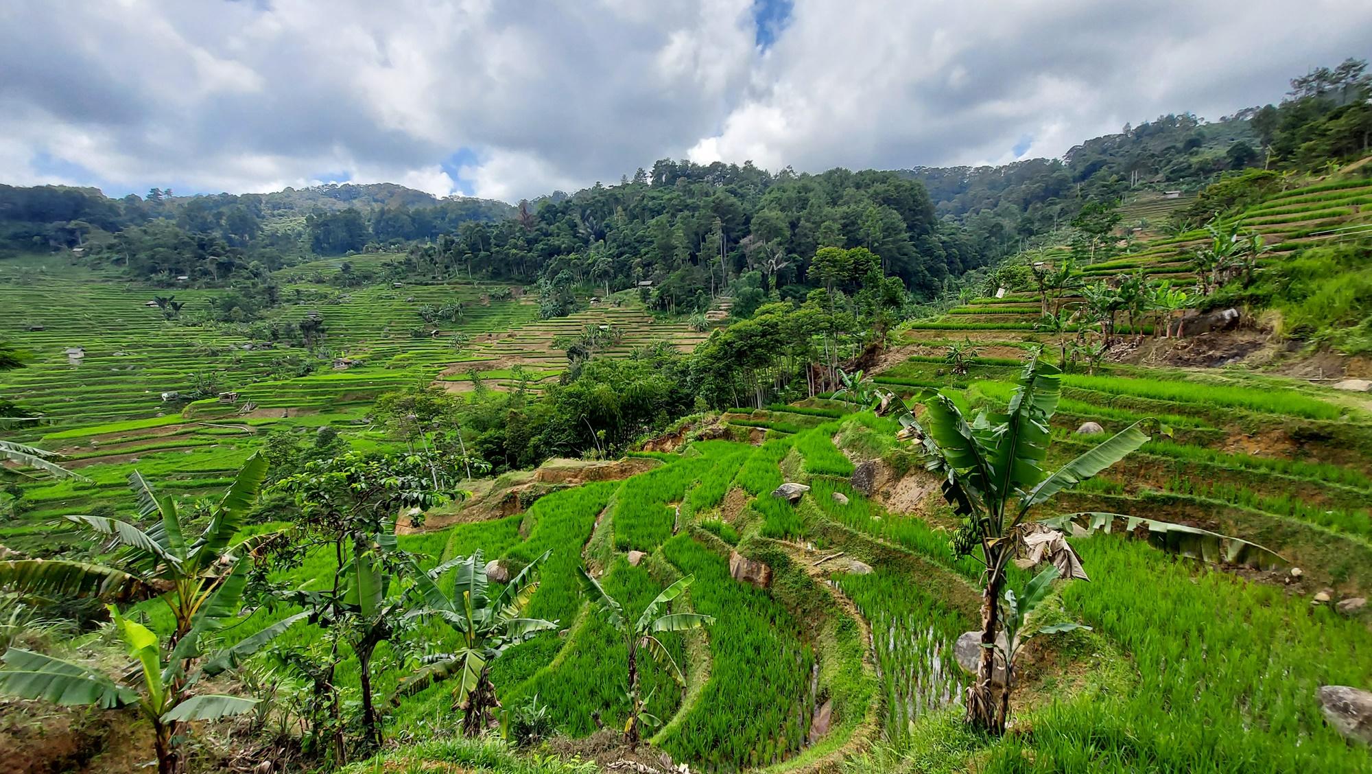 Terasering sawah yang mempesona di Desa Wisata Malasari