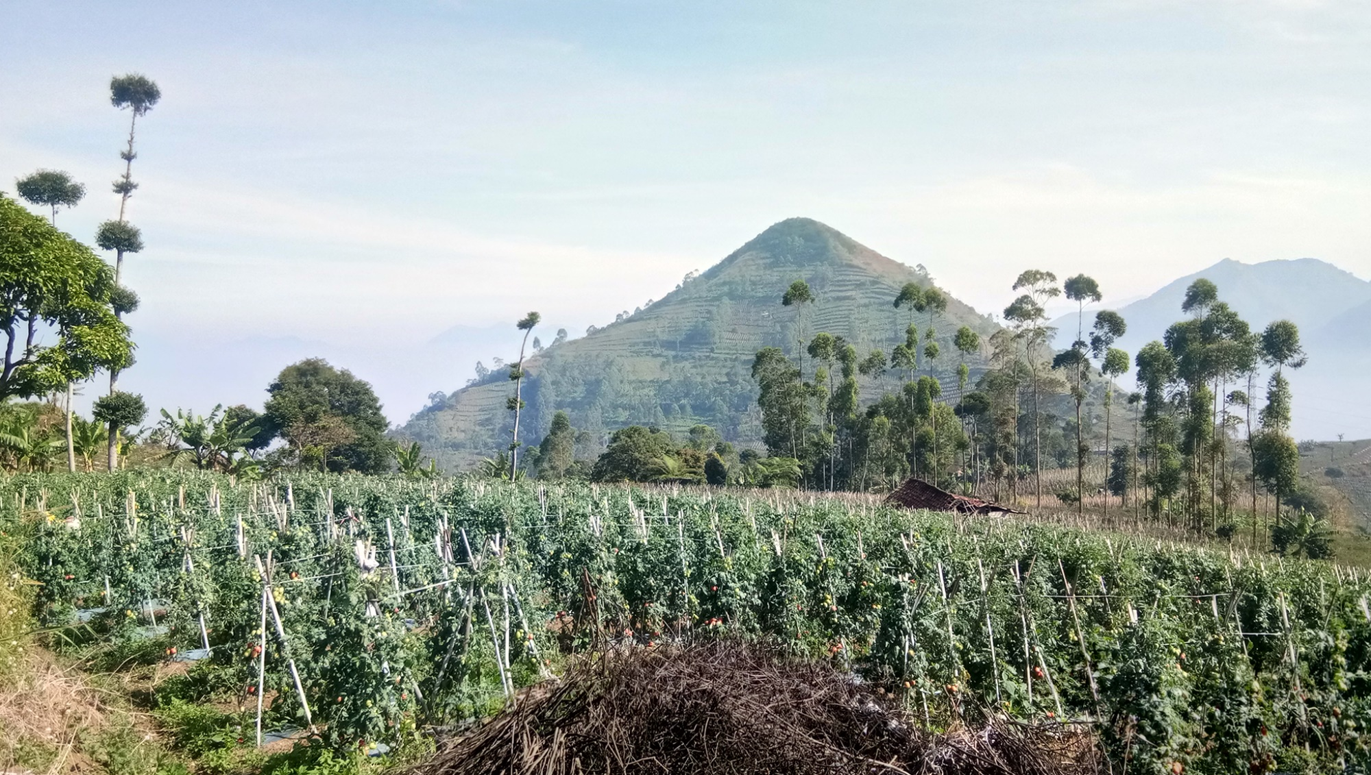 Gunung berbentuk kerucut sempurna