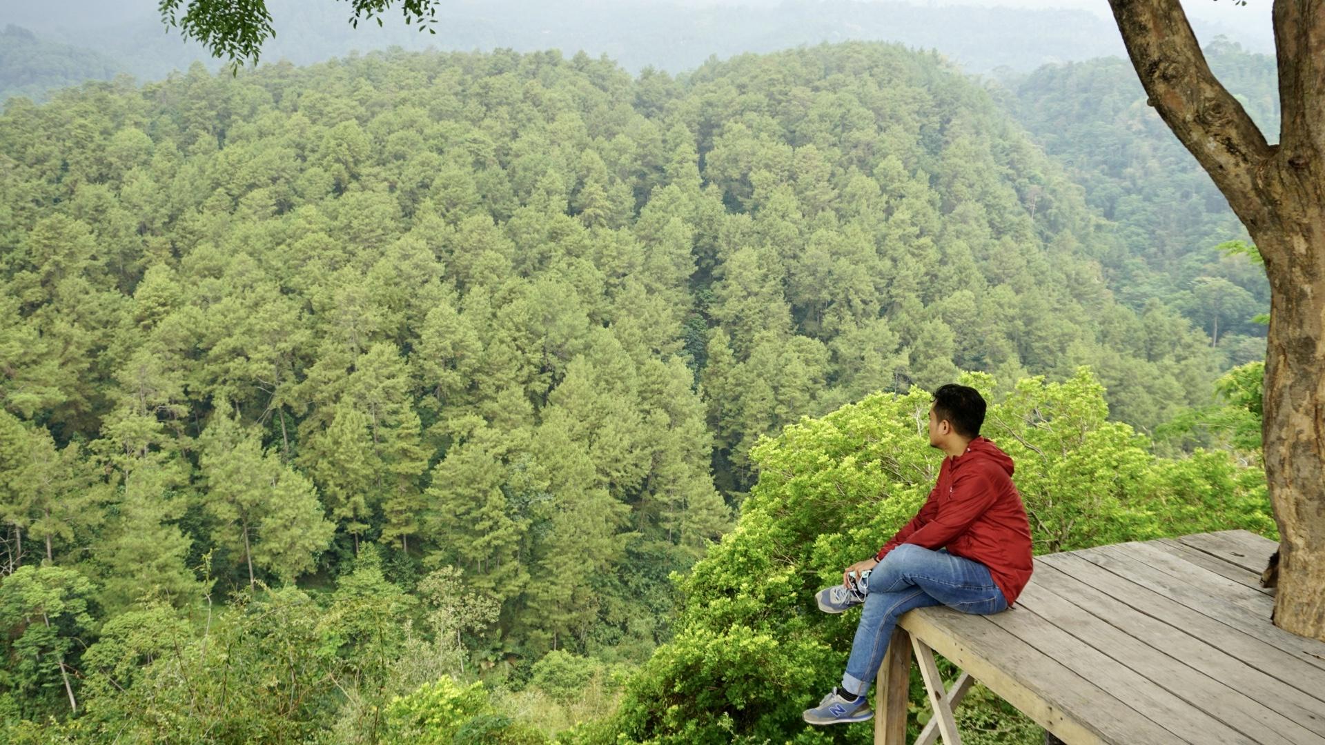 Menikmati pemandangan hutan